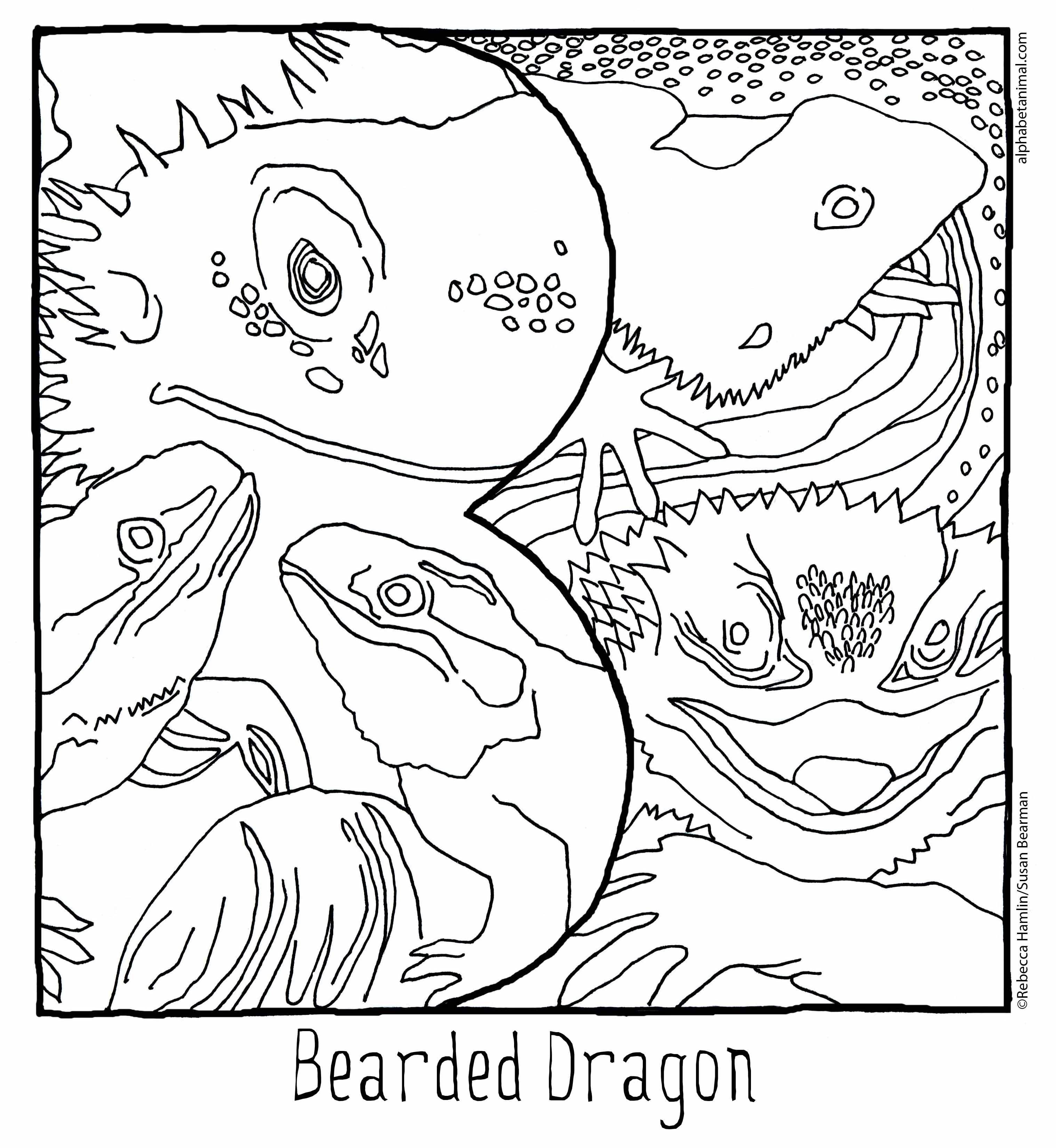 B Is For Bearded Dragon