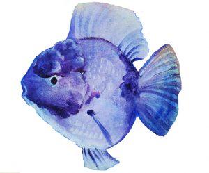 Animal Store Alphabet Book Blue Fish