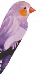 Animal Store Alphabet Book Purple Finch
